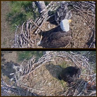 eagle-nest-duo-cam